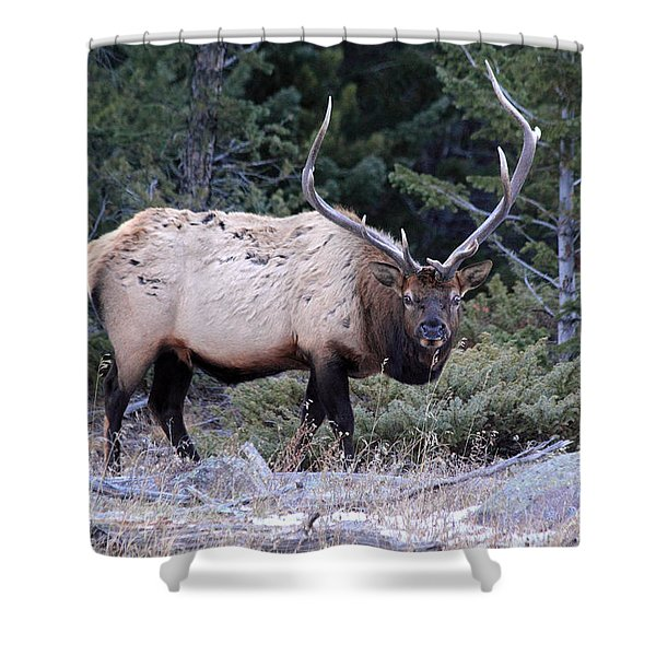 Colorado Bull Elk Shower Curtain