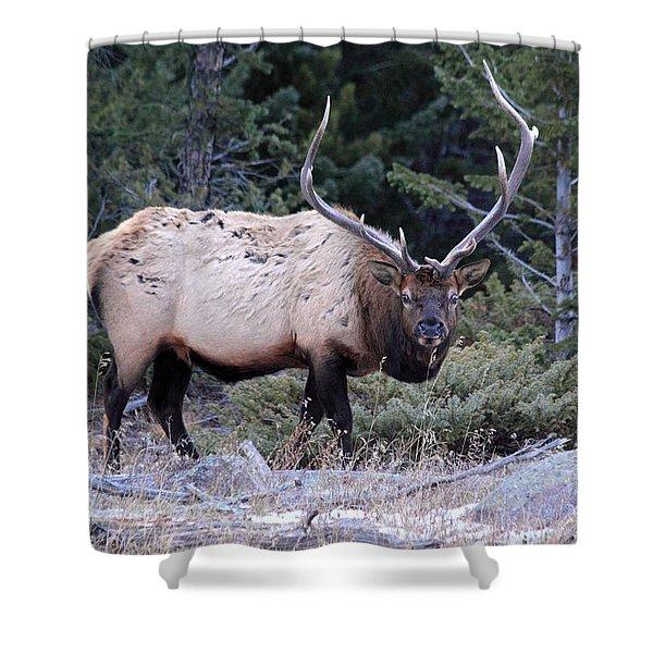 Colorado Bull Elk Shower Curtain