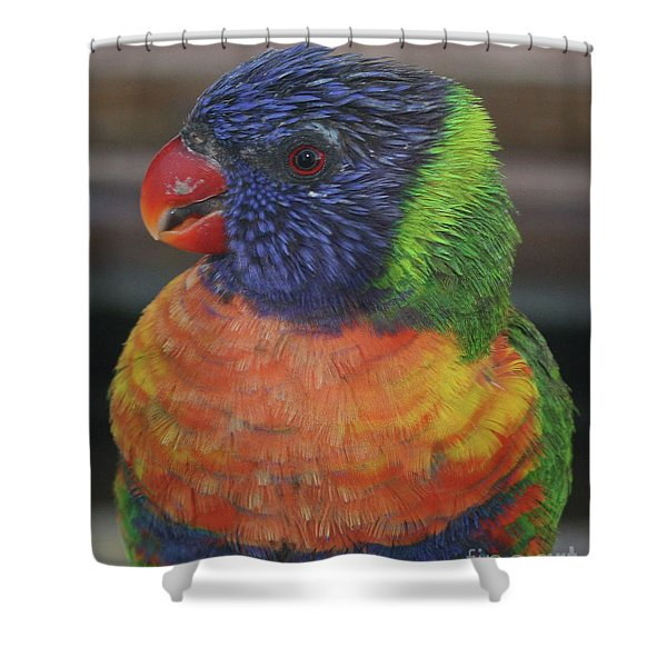 Colored Feathers Shower Curtain