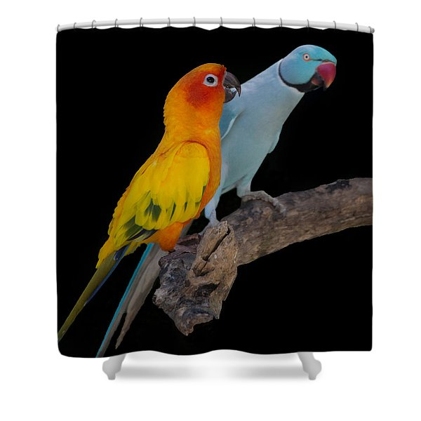 Sun Conure And Ring Neck Parakeet Shower Curtain