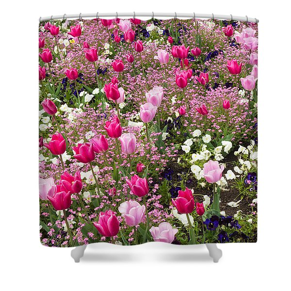 Colorful Pink Tulips And Other Flowers In Spring Shower Curtain