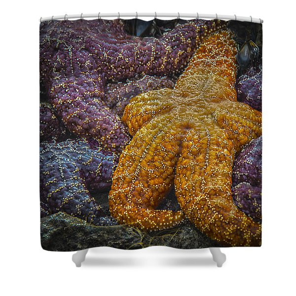 Colorful Starfish Shower Curtain