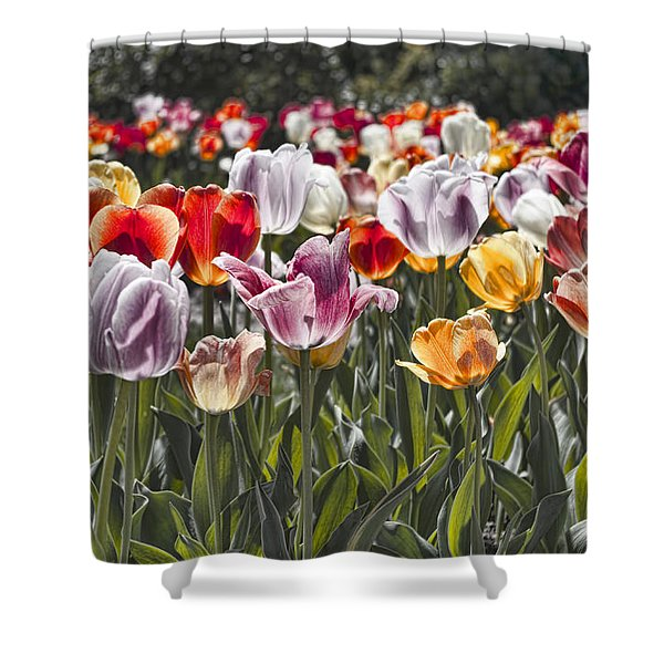 Colorful Tulips In The Sun Shower Curtain