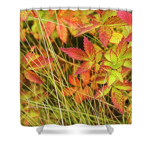 Coloured Leaves, Wild Raspberry Shower Curtain