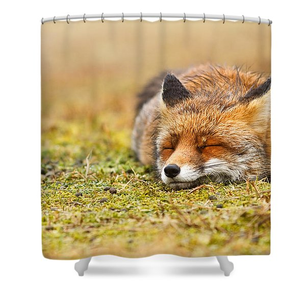 Comfortably Fox Shower Curtain