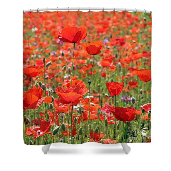 Commemorative Poppies Shower Curtain