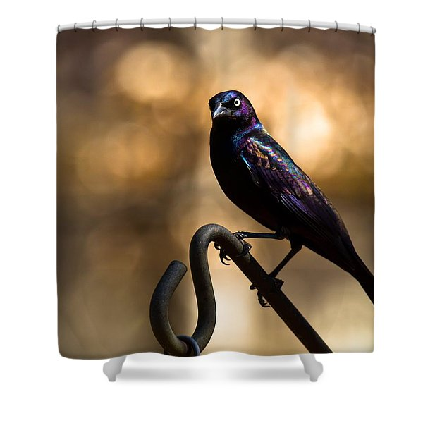 Common Grackle Shower Curtain