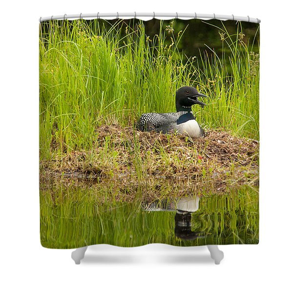 Common Loon Nesting Shower Curtain
