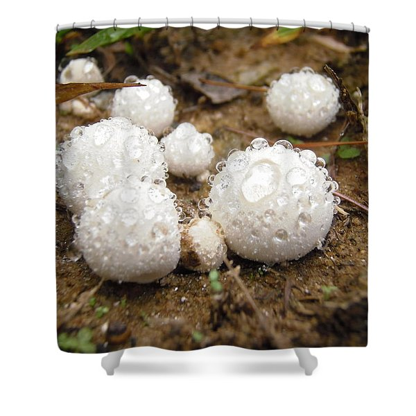 Common Puffball Dewdrop Harvest Shower Curtain