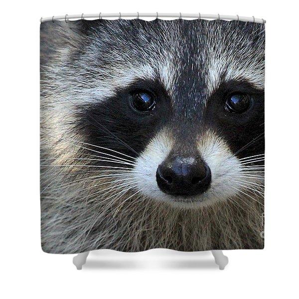 Common Raccoon Shower Curtain