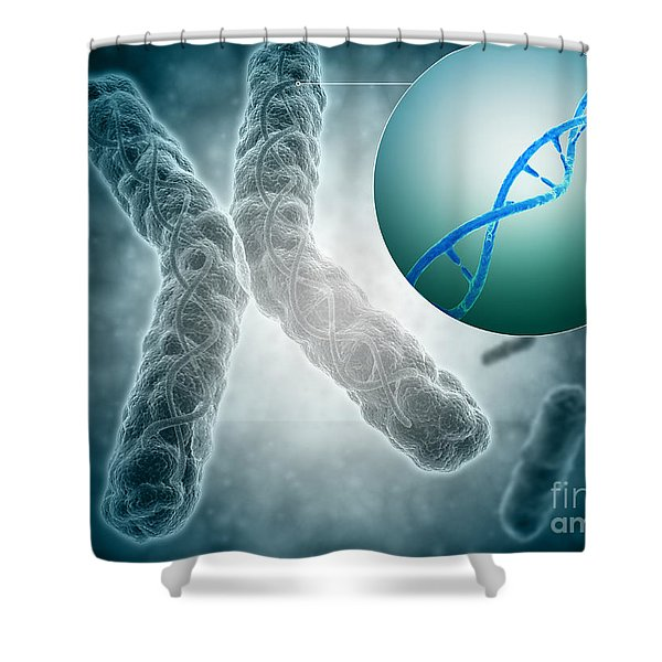 Conceptual Image Of A Telomere Showing Shower Curtain