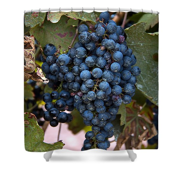 Shower Curtain featuring the digital art Concord Grapes by Leeon Photo