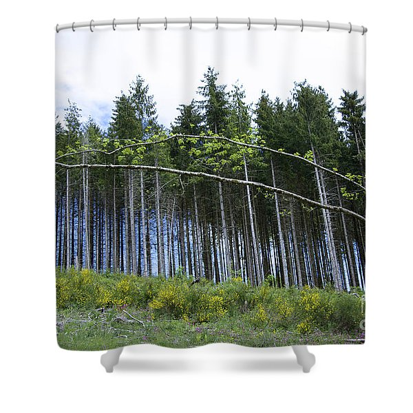 Coniferous Forest Shower Curtain