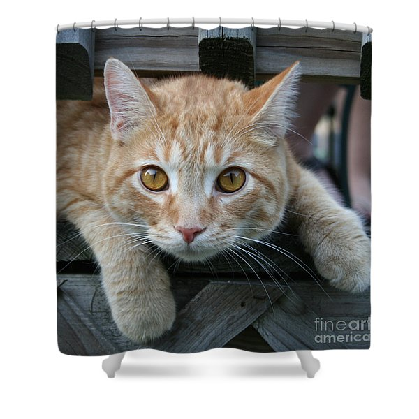 Cool Cat Named Calvin Shower Curtain