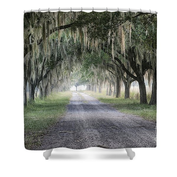 Coosaw Fog Avenue Of Oaks Shower Curtain