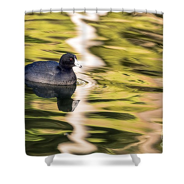 Coot Reflected Shower Curtain