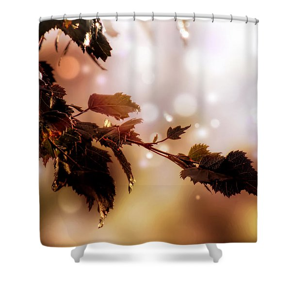 Copper Birch Shower Curtain