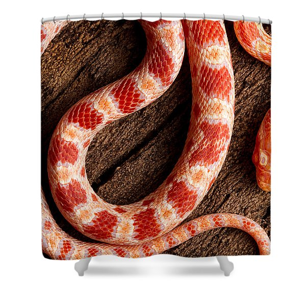 Corn Snake P. Guttatus On Tree Bark Shower Curtain