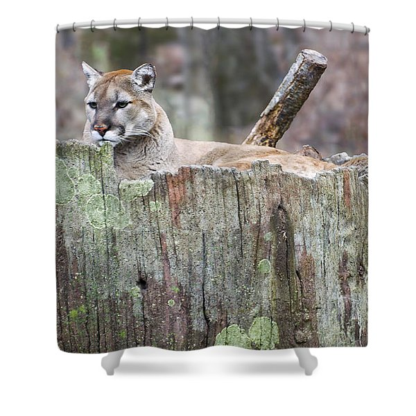 Cougar On A Stump Shower Curtain