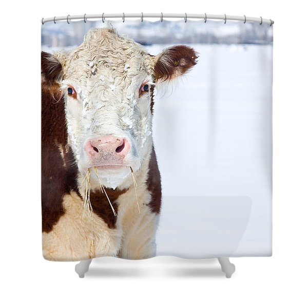 Cow - Fine Art Photography Print Shower Curtain