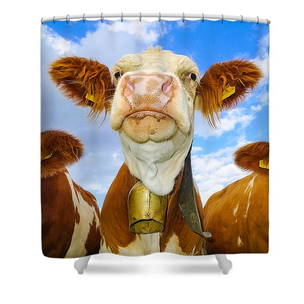 Cow Looking At You - Funny Animal Picture Shower Curtain