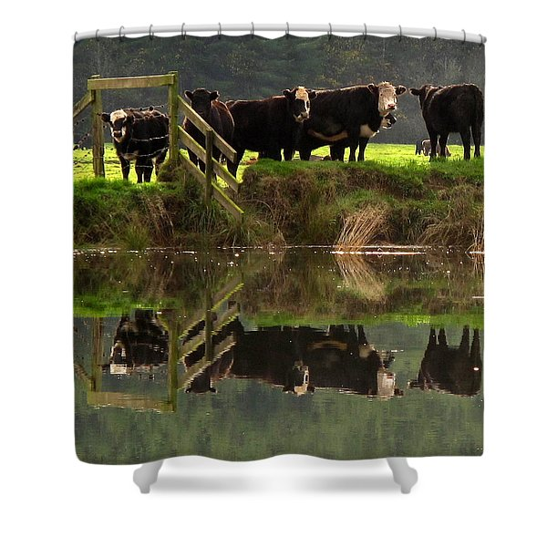 Cow Reflections Shower Curtain