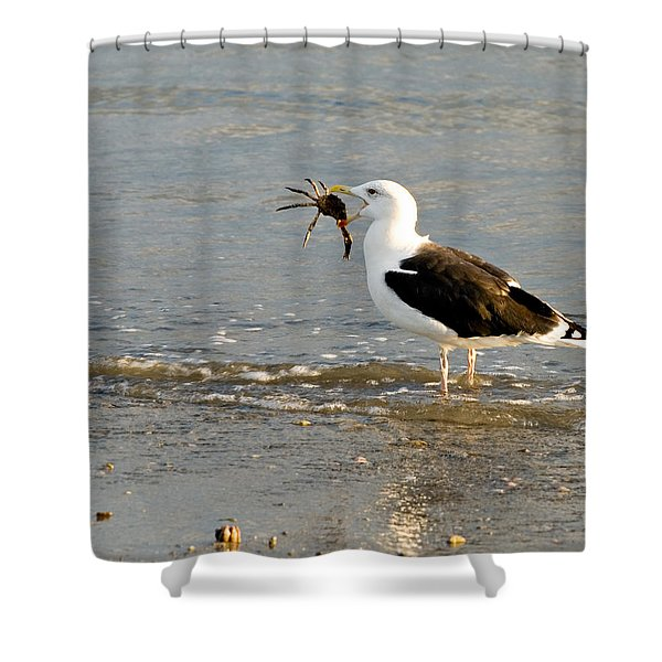 Crab For Dinner Shower Curtain