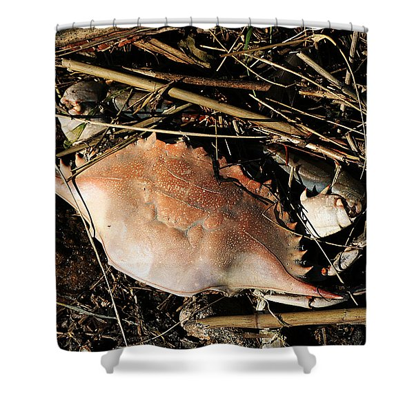 Crab Shell Shower Curtain
