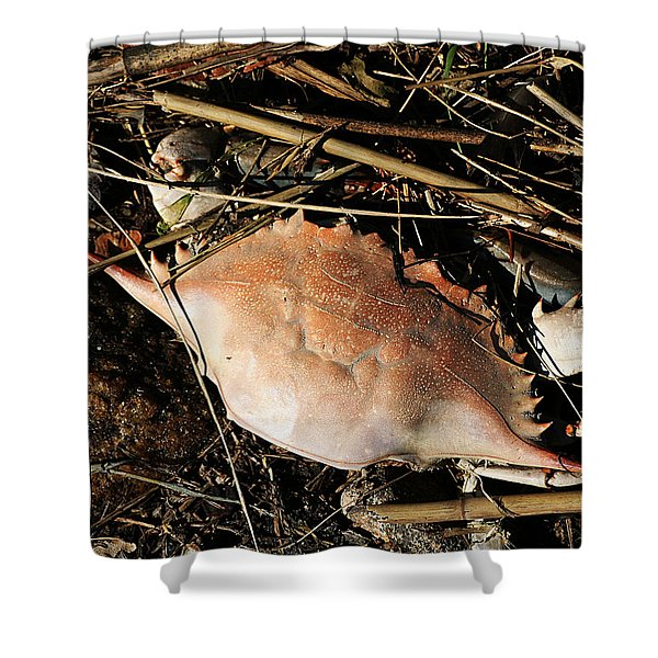 Shower Curtain featuring the photograph Crab Shell by William Selander