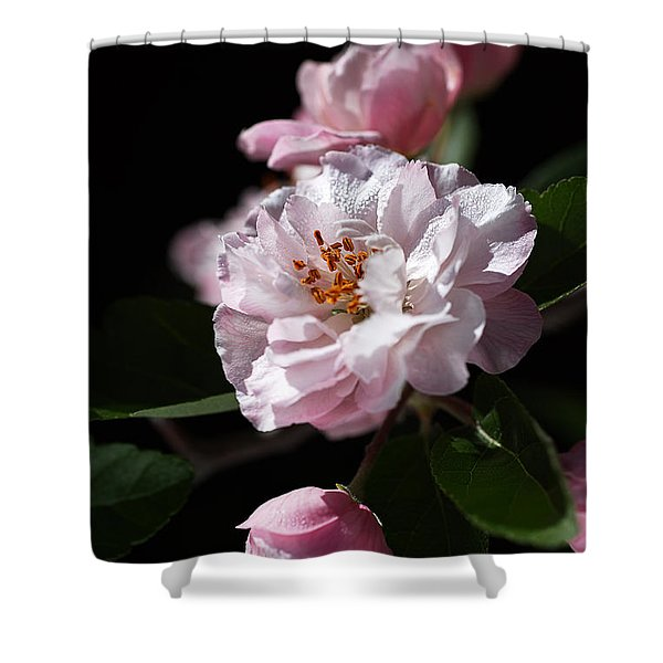Crabapple Flowers Shower Curtain
