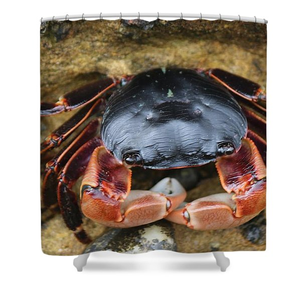 Crabby Pants  Shower Curtain