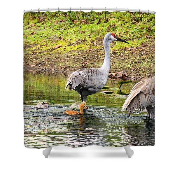 Crane Family Swim II Shower Curtain