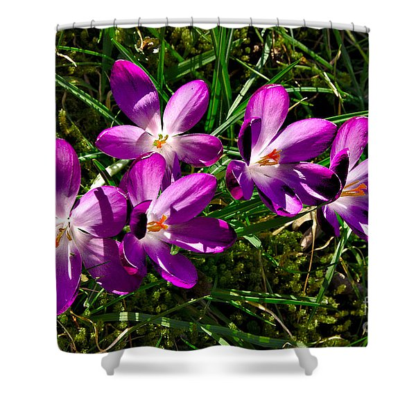 Crocus In The Grass Shower Curtain