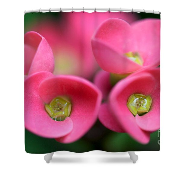 Crown Of Thorns Photo Shower Curtain