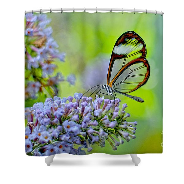 Crystal Butterfly II Shower Curtain