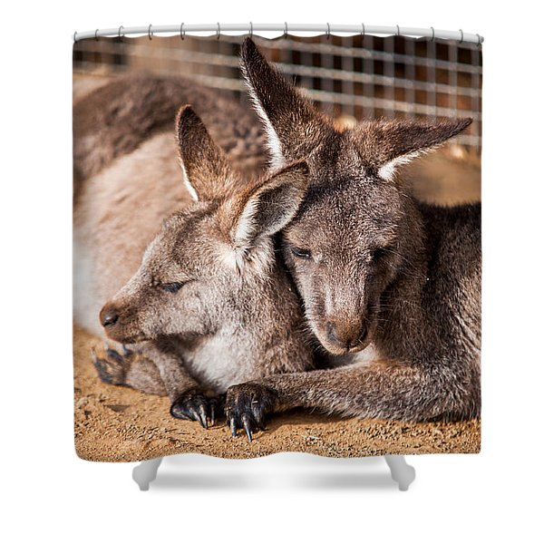 Cuddling Kangaroos Shower Curtain