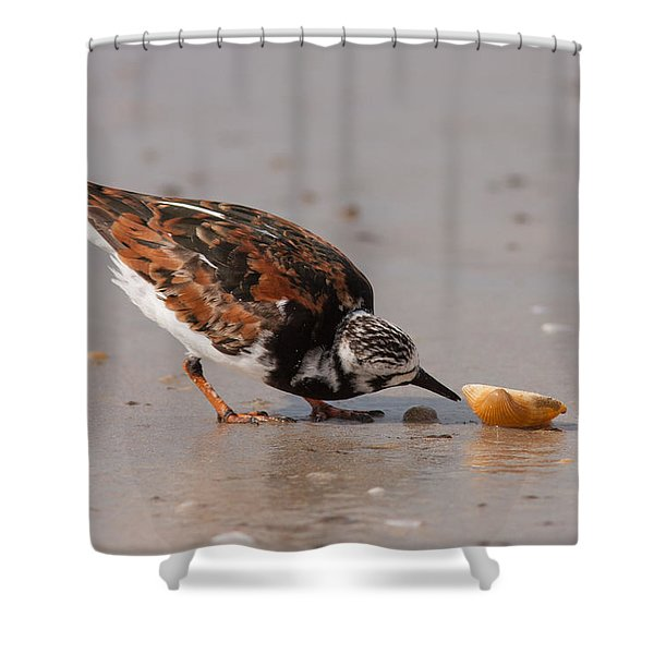 Curious Turnstone Shower Curtain