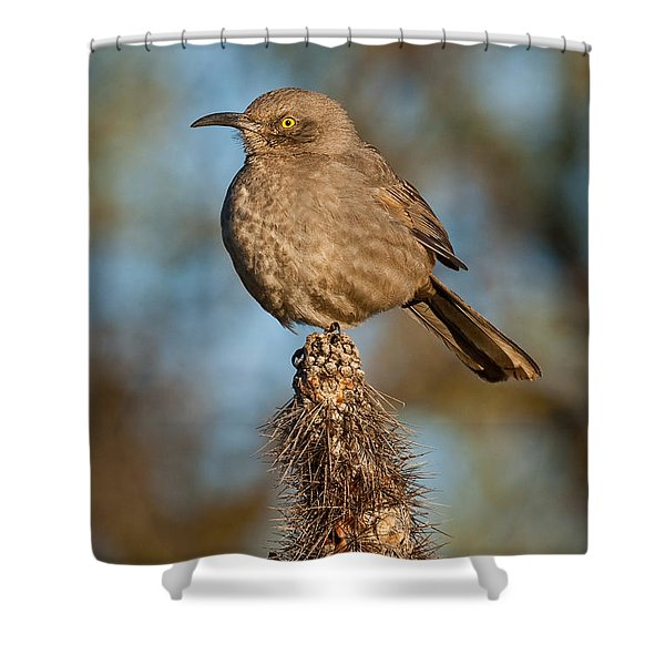 Curve-billed Thrasher On A Cactus Shower Curtain