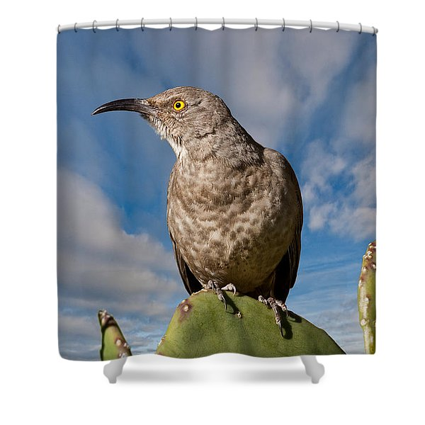 Curve-billed Thrasher On A Prickly Pear Cactus Shower Curtain