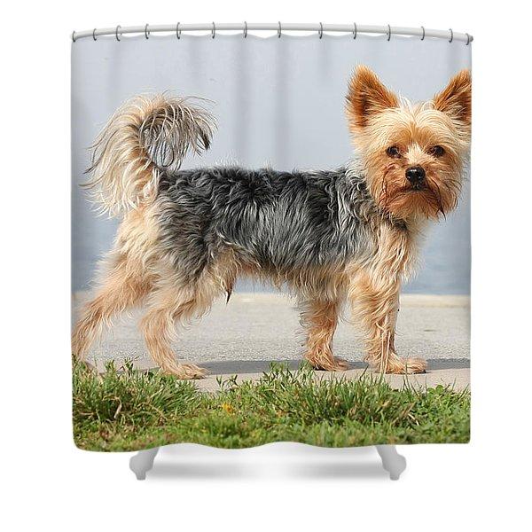 Cut Little Dog In The Sun Shower Curtain
