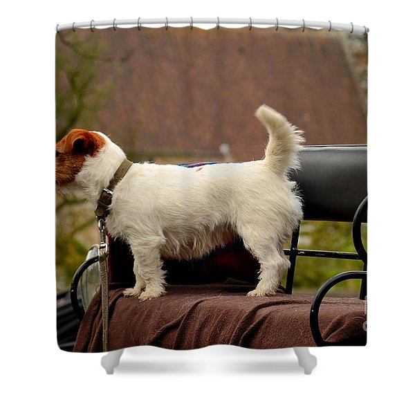 Cute Dog On Carriage Seat Bruges Belgium Shower Curtain