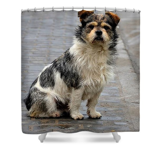 Cute Dog Sits On Pavement And Stares At Camera Shower Curtain
