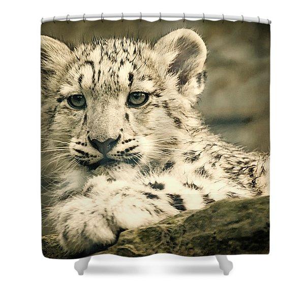 Cute Snow Cub Shower Curtain