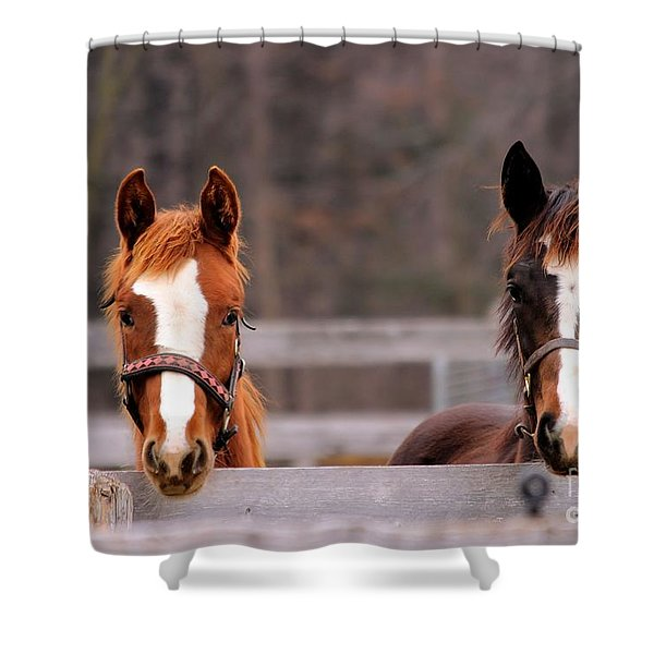 Cute Yearlings Shower Curtain