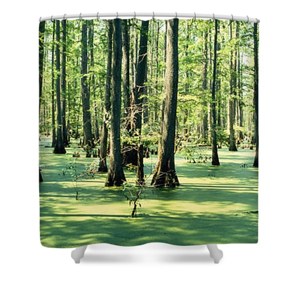 Cypress Trees In A Forest, Shawnee Shower Curtain