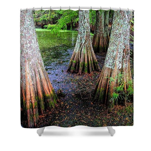 Cypress Waltz Shower Curtain