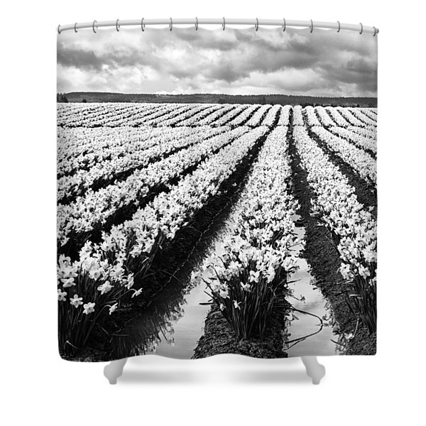 Daffodil Fields II Shower Curtain