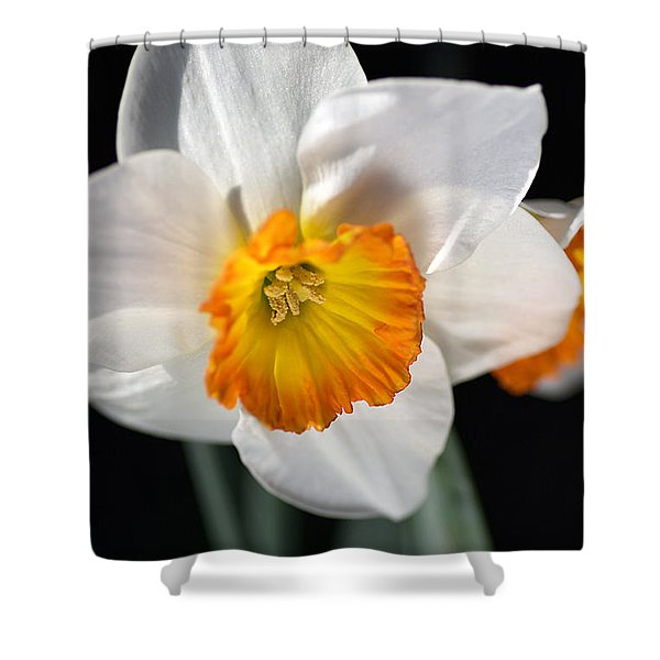 Daffodil In White Shower Curtain