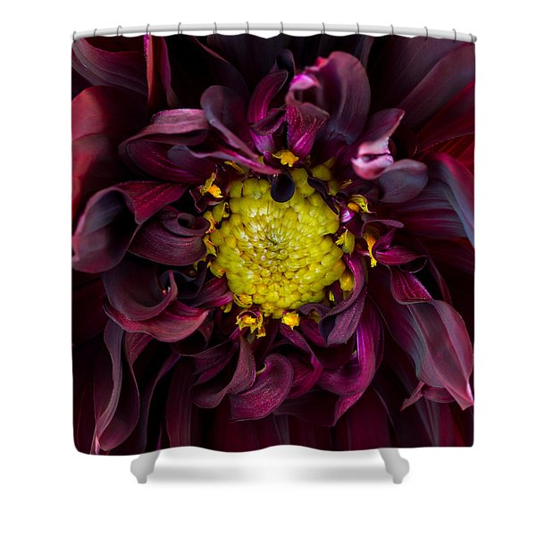 Dahlia - A Study In Crimson Shower Curtain