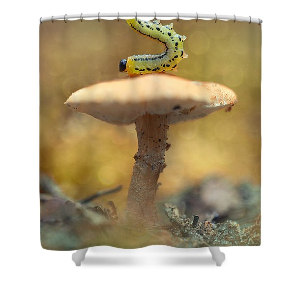 Shower Curtain featuring the photograph Daily Excercice by Jaroslaw Blaminsky